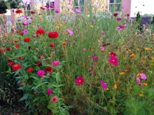 Oberlin Flowers